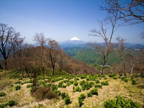 140510 檜洞丸付近より富士山_R.jpg