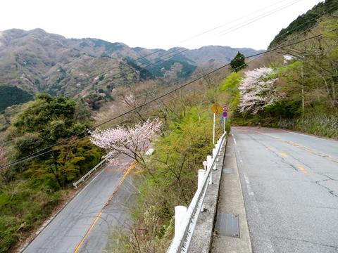 170423 椿ライン~芦ノ湖029.jpg