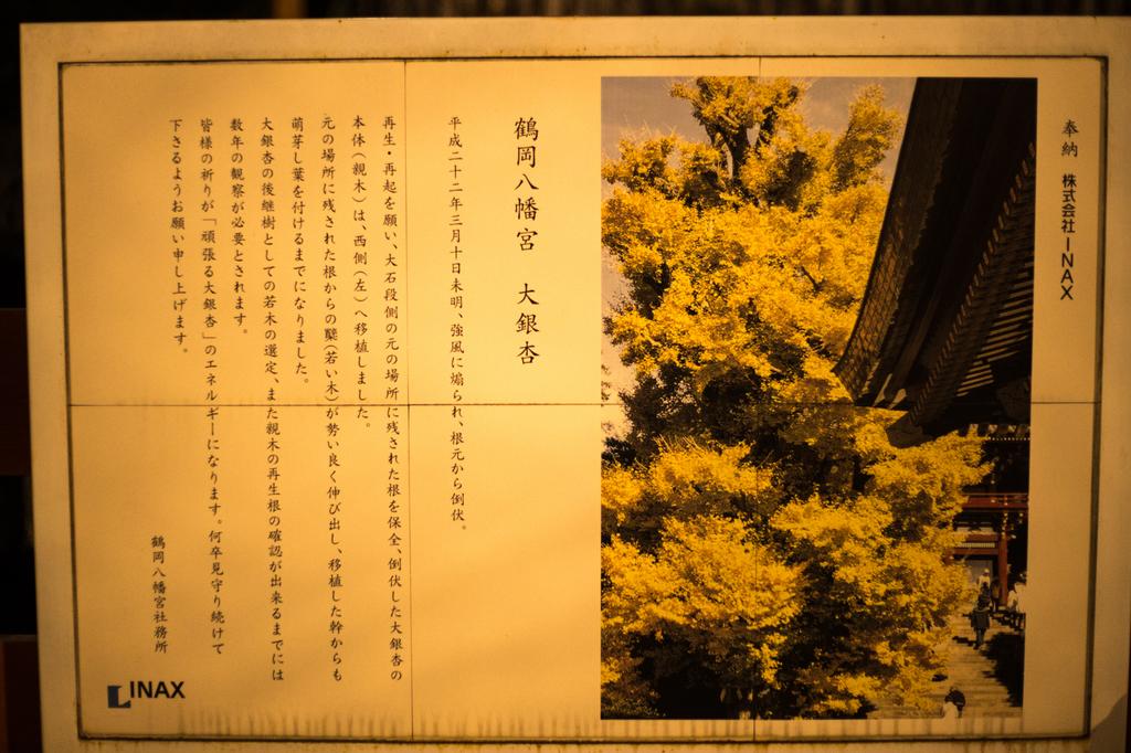 2018-02 Kamakurayoru007-2.jpg