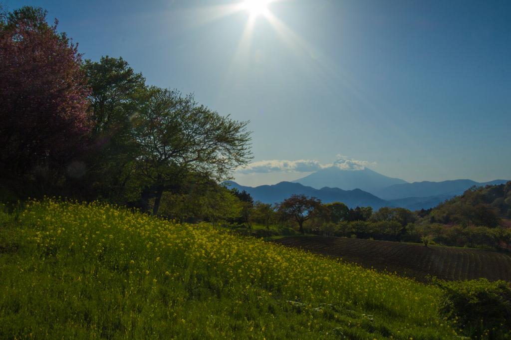2018-04-08-渋沢丘陵など022-1.jpg