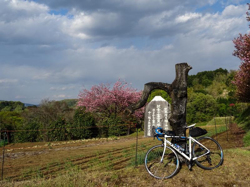 2018-04-08 渋沢丘陵など010.jpg