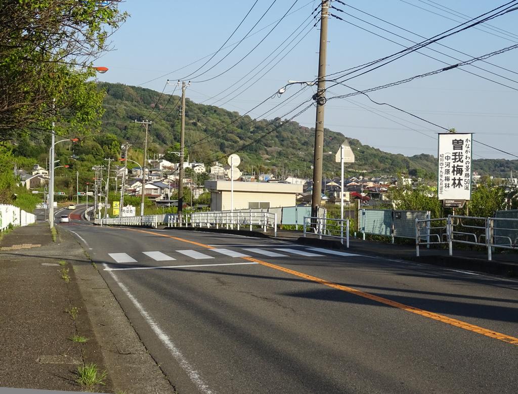 2018-04-08 渋沢丘陵など011.jpg