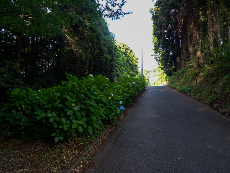 2018-06-17 酒匂川~富士見塚~渋沢丘陵他011.jpg