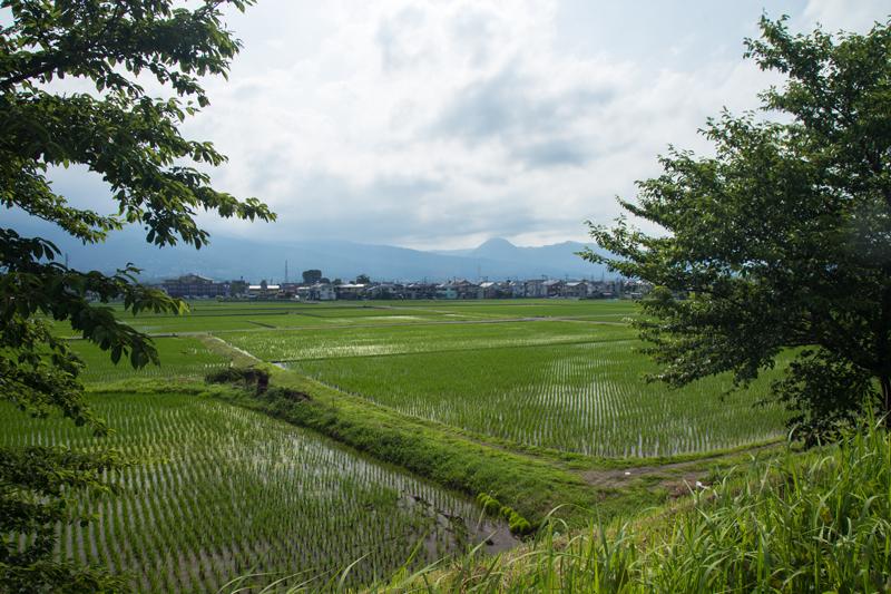 2018-06-17 酒匂川~富士見塚~渋沢丘陵他020.jpg
