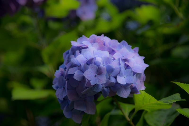 2018-06-17 酒匂川~富士見塚~渋沢丘陵他024.jpg