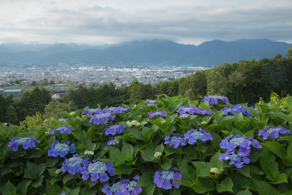2018-06-17 酒匂川~富士見塚~渋沢丘陵他026.jpg