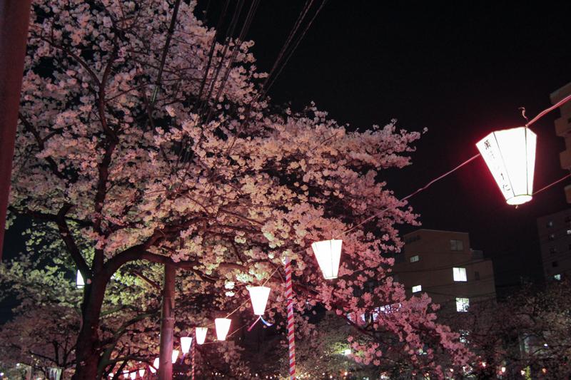 2018-3下_大岡川2-004-1.jpg