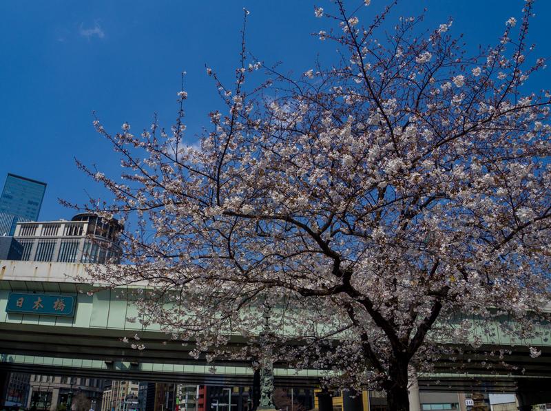 2019-03-nihonbashi-000.jpg