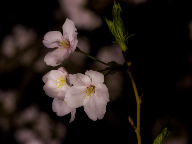 2019-04-oookagawa-002-1.jpg