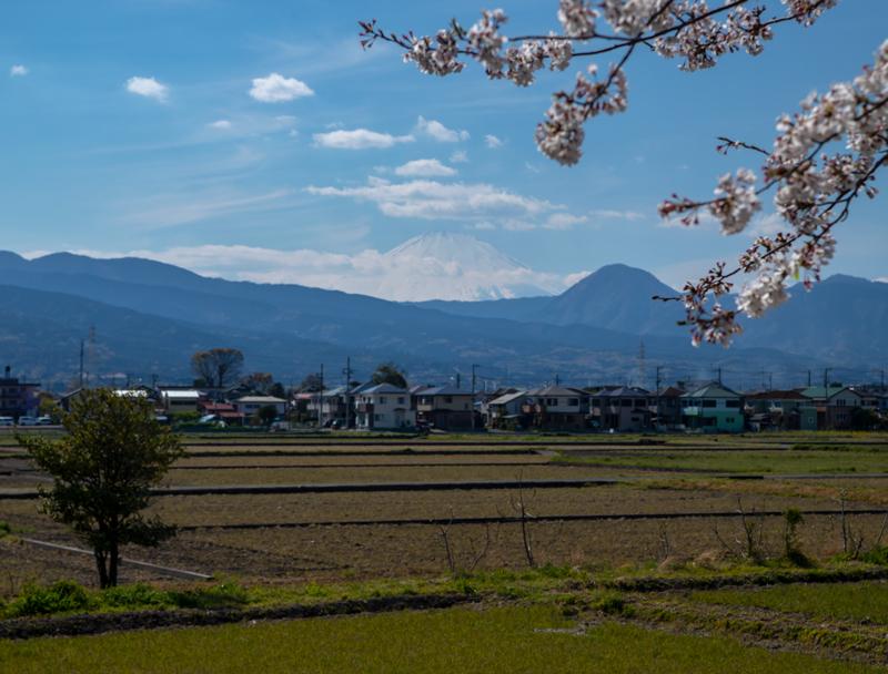 2019-4Naka-yamakita-009 (3).jpg
