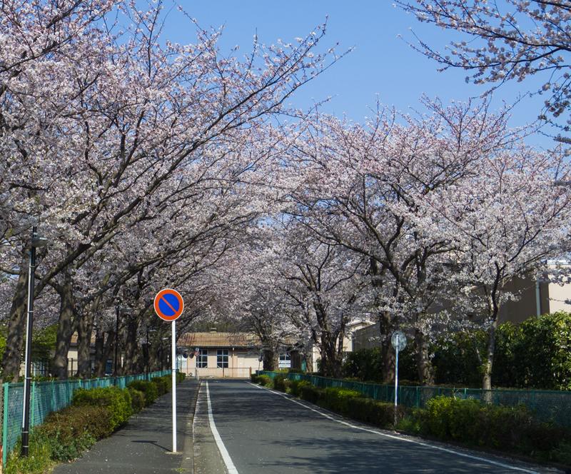 201904hikichigawa-003-2.jpg