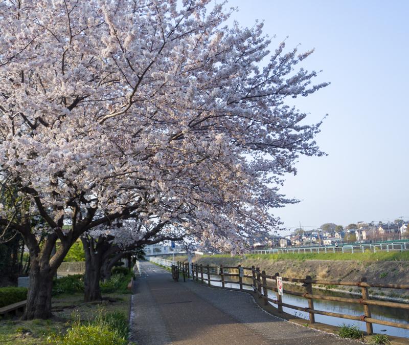 201904hikichigawa-005.jpg